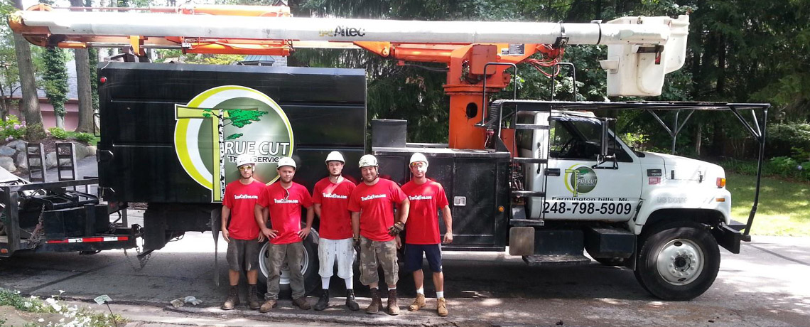 Tree Removal Specialists Serving Metro Detroit