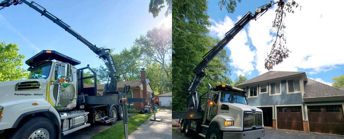 Large Crane 2021_2