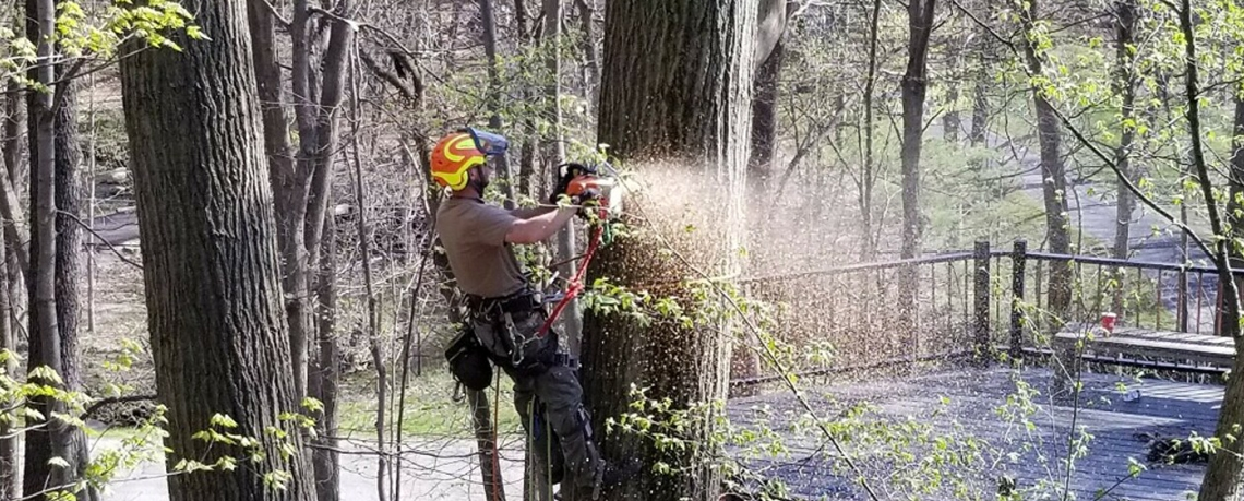 Skilled and certified in tree removals and all types of tree care